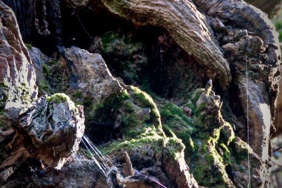 Tree roots, 22/4/20