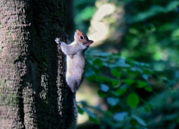 Squirrel, 29/5/20
