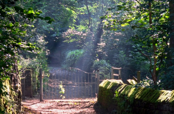Gate to woods, 25/6/20