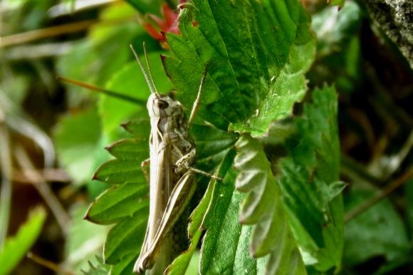 Grasshopper, 2/6/20