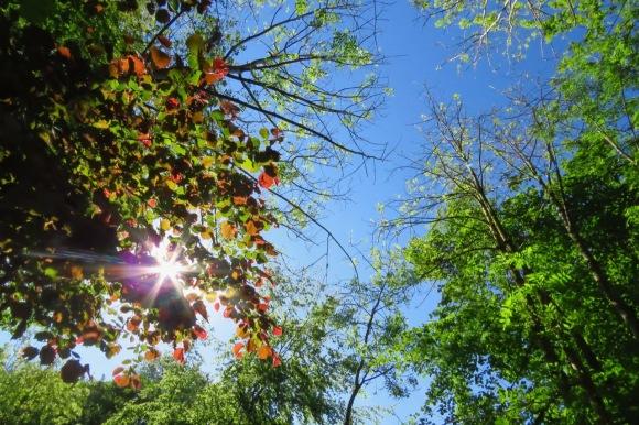Tree sky sun view, 1/6/20