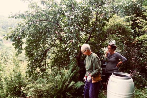 Tree consultation, 9/8/20