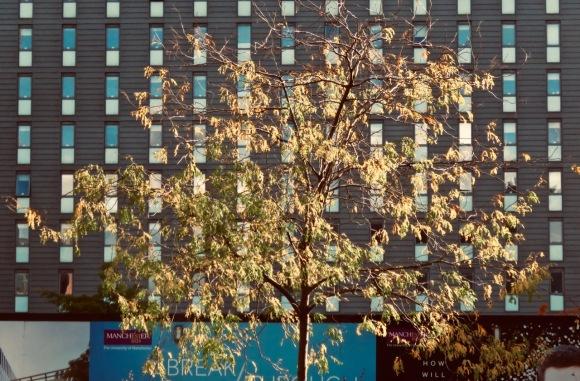 Campus tree, 29/9/20