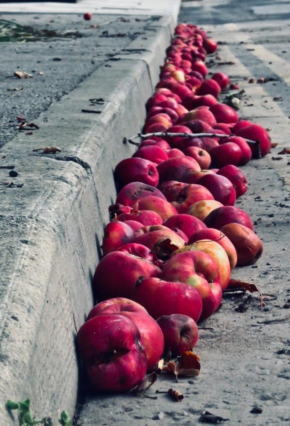 Fallen apples, 16/9/20