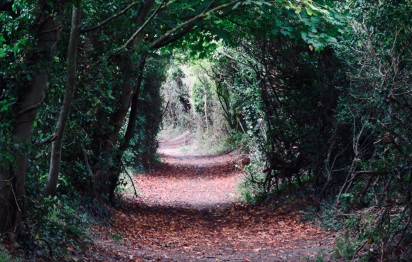 Hedge tunnel, 9/9/20