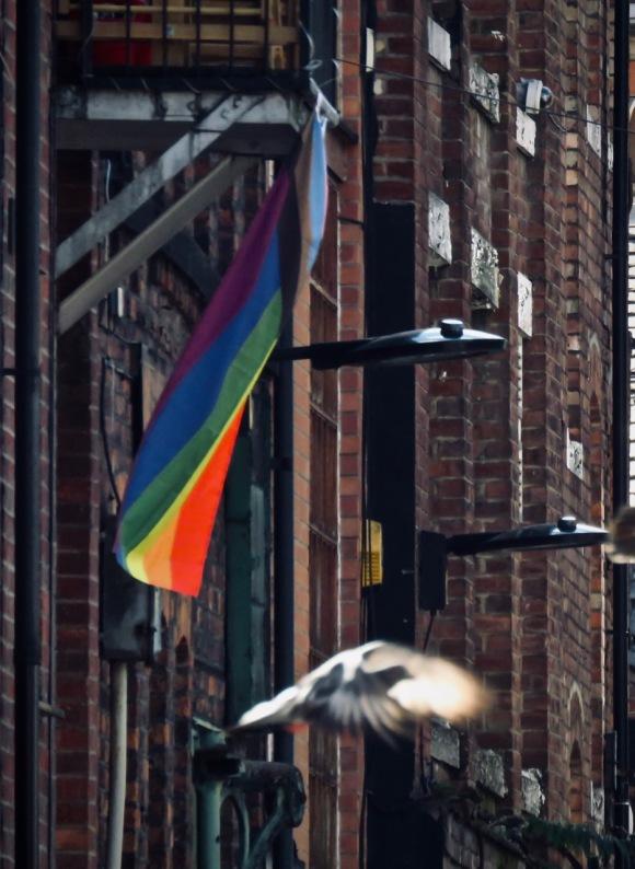 Rainbow and pigeon, 25/9/20