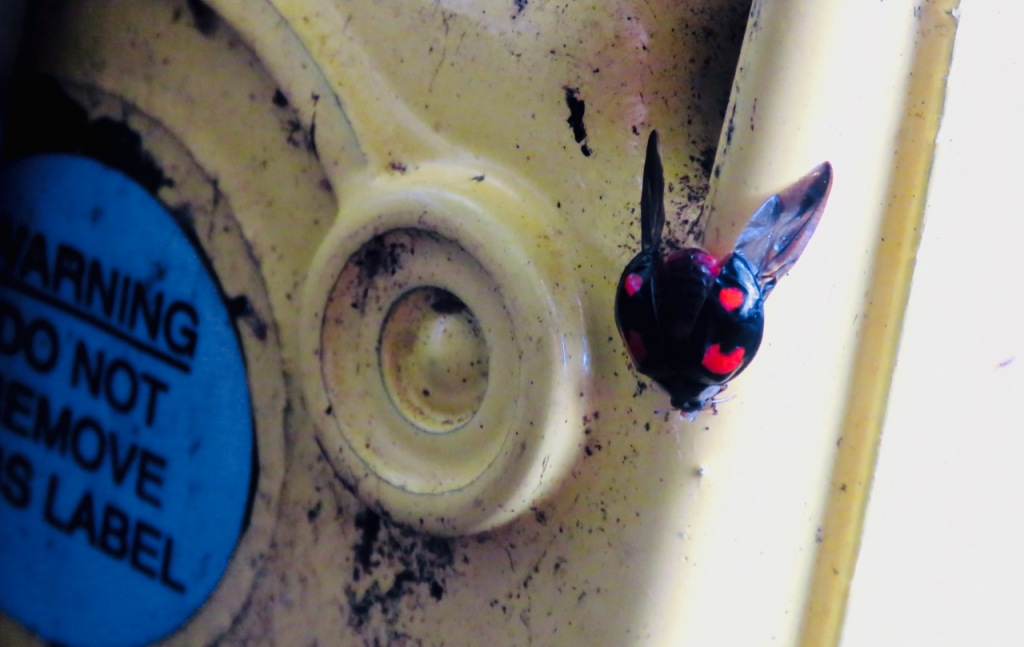 Station ladybird, 14/10/20