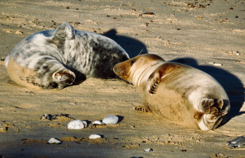 Seal conversation, 27/12/20