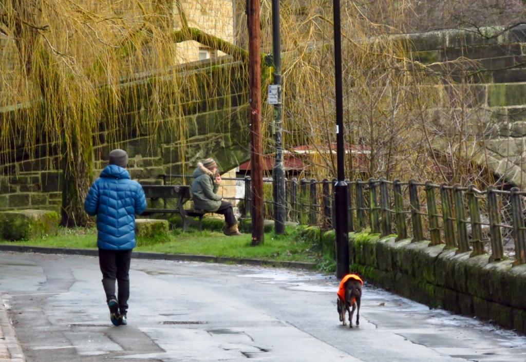 Distanced dog, 25/1/21