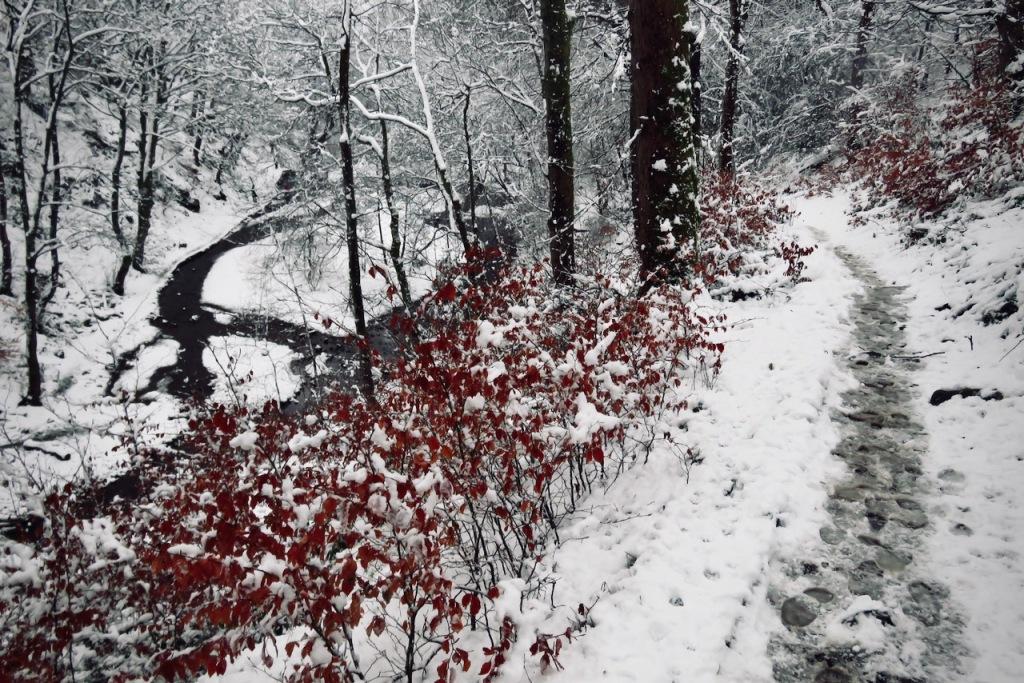 Snowy woods, 2/2/21