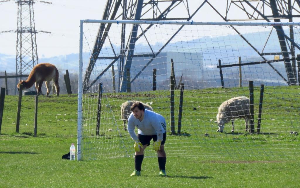 Goalie, pylon, llama, 3/4/21