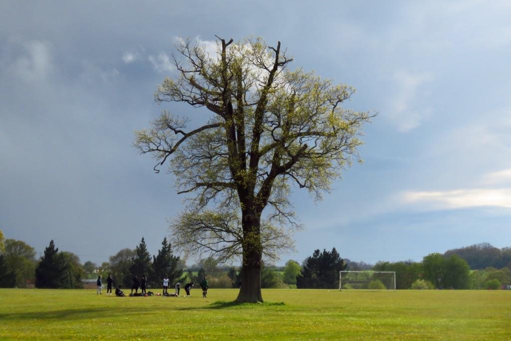 Stockwood Park tree, 6/5/21