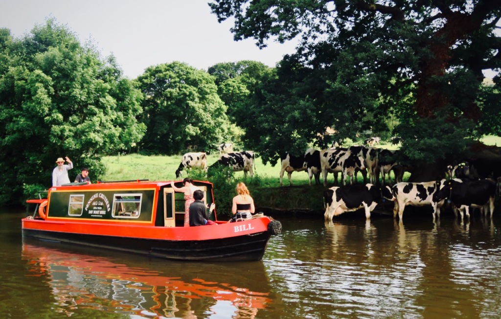 Barge and cows, 18/7/21