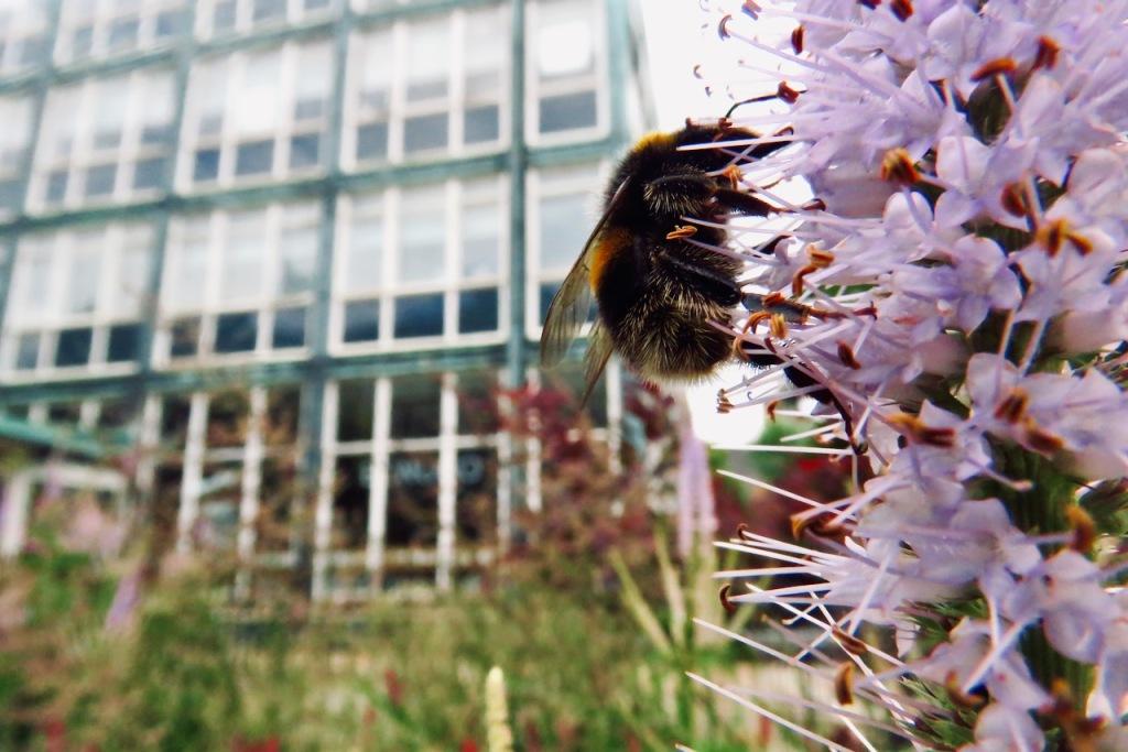 Campus bee, 7/7/21