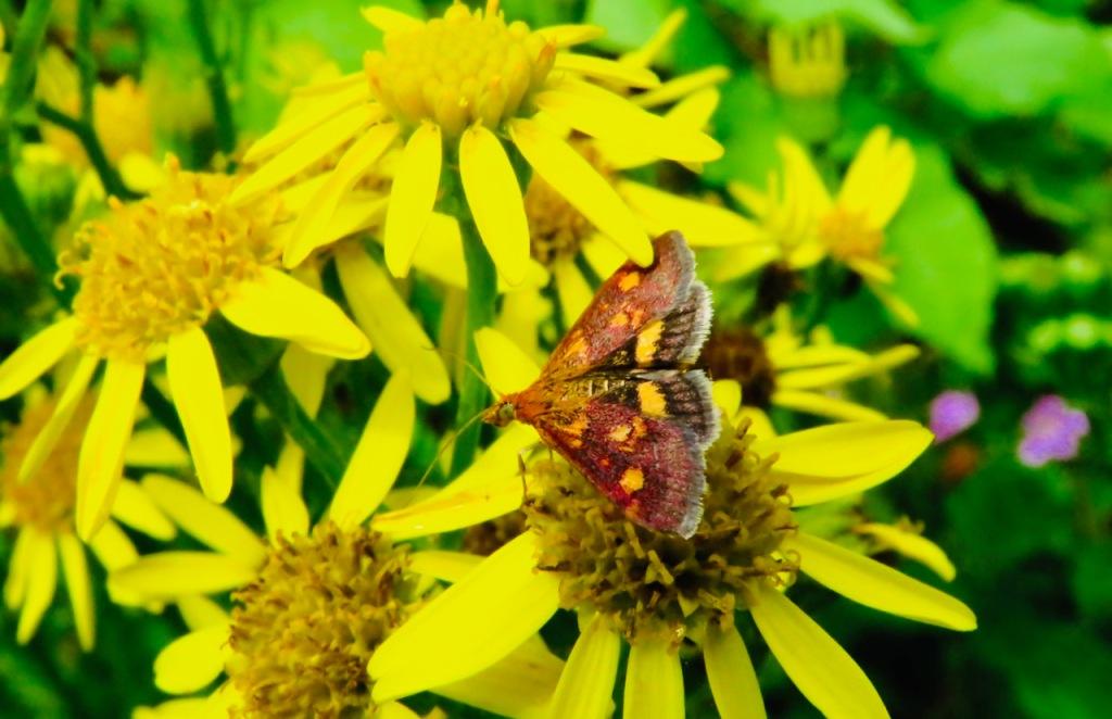 Moth, 1/8/21