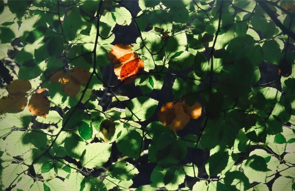 Leaves, 21/10/21