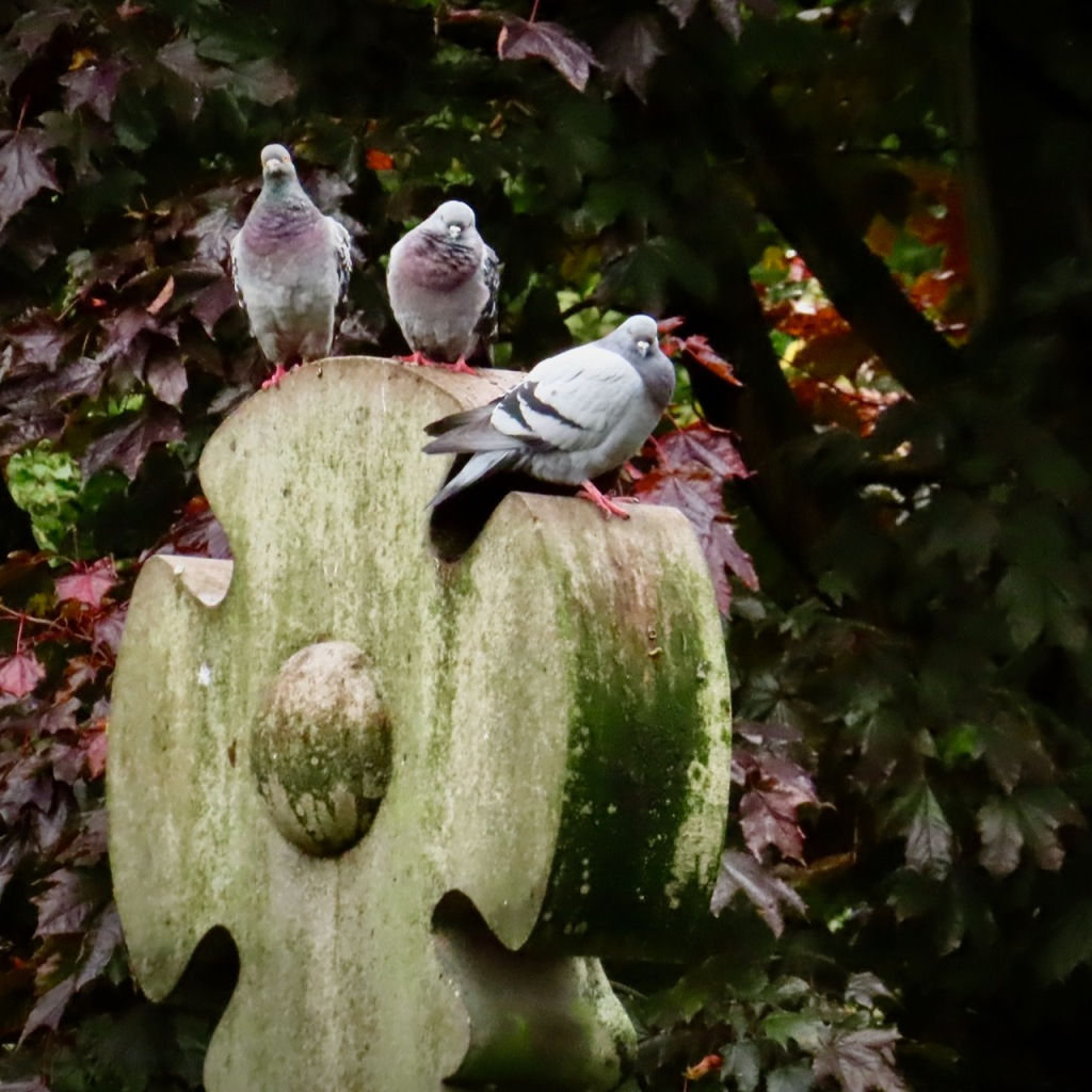 Pigeon bouncers, 19/10/21